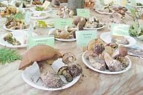 """Rozlišit houby na ty jedlé a """"špatné"""" nebylo na výstavě v Rychnově n. K. vůbec těžké – stačilo se orientovat podle barev semaforu. Muchomůrky se přiléhavě ocitly v rakvi."""