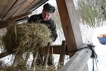 """PŘIPRAVIT ZVĚŘ na zimu je náročné. """"Je to hodně práce a hodně hodin, každý má přidělený to své, přesto se dělají kontroly, aby bylo vše řádně zakrmeno,"""" říká Vladimír Šabata"""