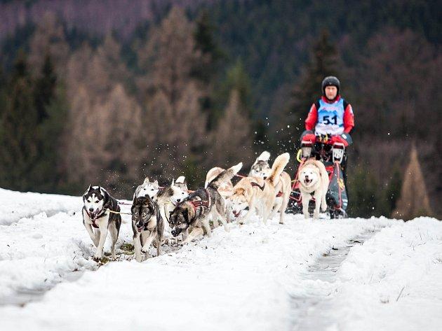 Z 20. ročníku extrémního závodu psích spřežení Šediváčkův long.