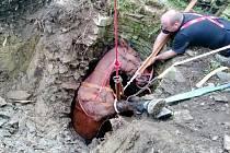Záchrana koně spadlého do studny v Bolehošti.