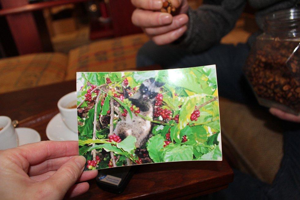 Navštívit Frolíkovu pražírnu kávy v Borohrádku je zážitek. Cibetka.