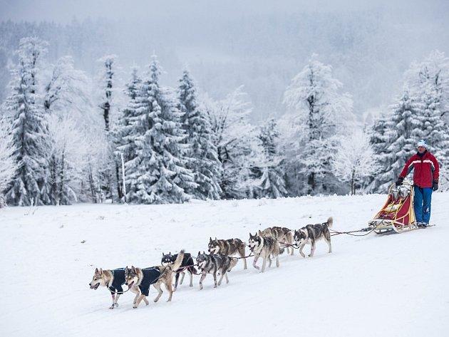 LETOS SE VYPRAVILO NA TRAŤ na devadesát musherů. Počasí jim přálo, letos se závod jede na saních.