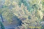 OKOLÍ PANELOVÝCH DOMŮ v lokalitě Na Trávníku bylo již od čtvrtka plné pokácených stromů (snímky dole). Pravý horní snímek je zachycen ještě před prací řemeslníků v říjnu 2013. Levý horní snímek je pořízen těsně po vykácení zeleně.