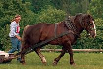 NA VÝSTAVĚ v Pěčíně se představil například plemenný hřebec Brynet.