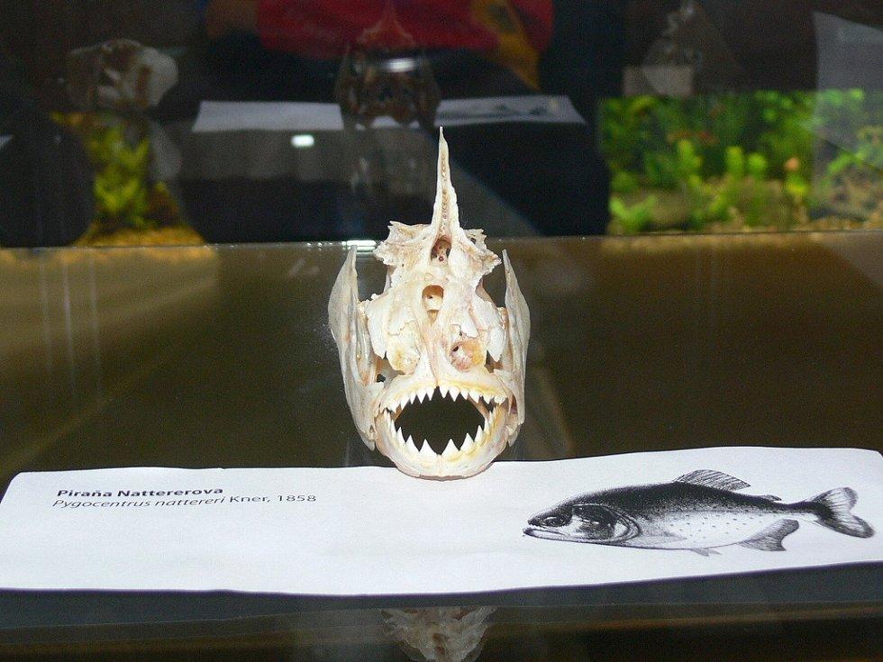 Akvaristická výstava v Rychnově nad Kněžnou.