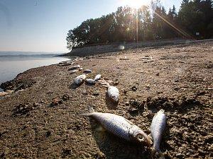 Uhynulé ryby na Rozkoši