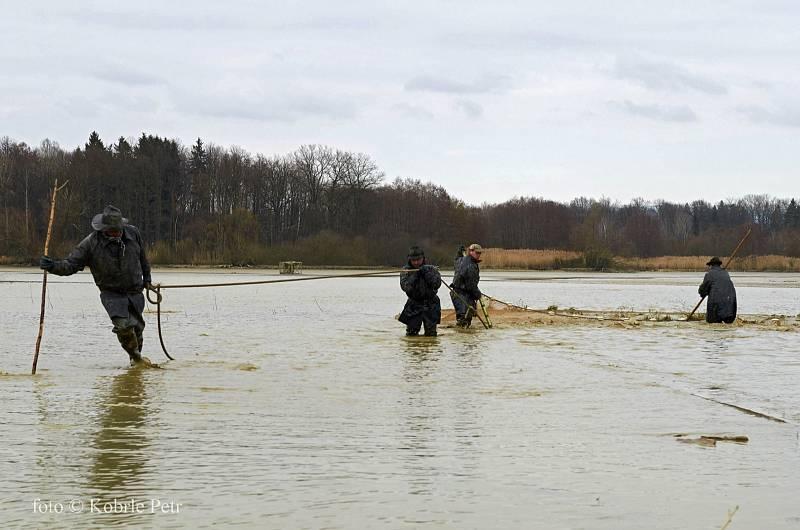 Jarní výlov Černíkovického rybníka.