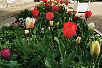 Půvabné jarní květy ozdobily zámecký park.