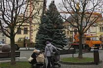 Vánoční strom už stojí na dobrušském náměstí.