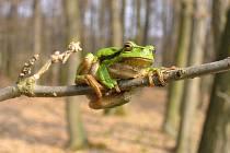 Zbytka u Českého Meziříčí jsou domovinou vzácných druhů rostlin a živočichů.