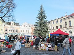 Strom na Starém náměstí v Rychnově se svou výškou blíží patnáctimetrové hranici.