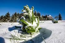 Sníh v Královéhradeckém kraji napadl jak v Krkonoších, tak v Orlických horách (na snímku).