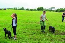 Na výročí psího útulku si mohli návštěvníci vyzkoušet i venčení.