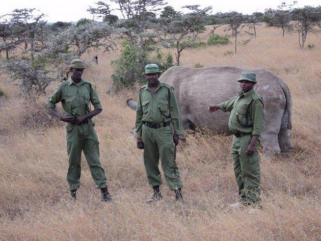 Mezi nosorožci v Keni