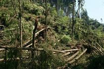 Poškození lesních porostů nedávným větrem v Orlických horách.