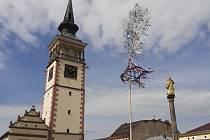 Junáci vztyčili na náměstí v Dobrušce májku