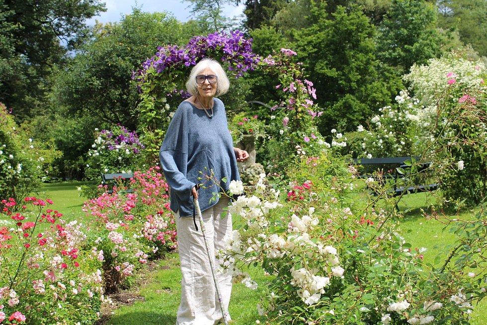 Diana Phipps Sternbergová ve své milované růžové zahradě.