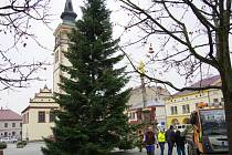 Také na náměstí F. L. Věka v Dobrušce už stojí vánoční strom.