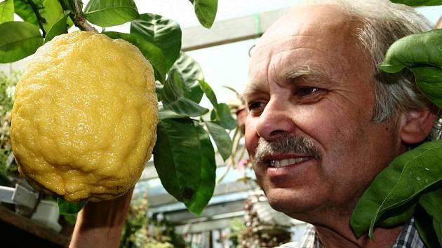 Jaroslav Černý a jeho citroník.