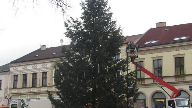 Vánočním stromem pro Rychnov nad Kněžnou je letos douglaska tisolistá.