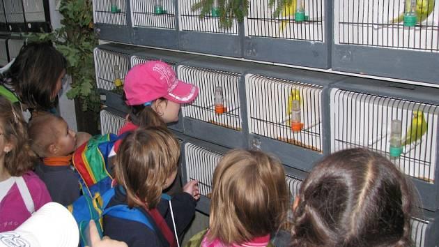 Výstava okrasného ptactva v Rychnově nad Kněžnou.