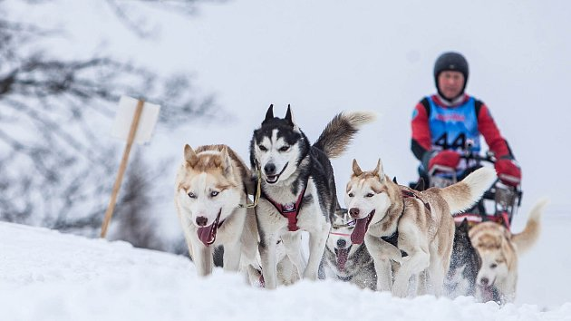 Šediváčkův long - extrémní závod psích spřežení.