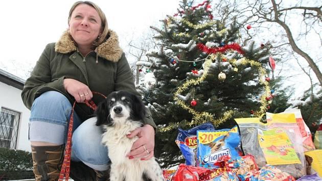 I pejsci a kočky bez domova si můžou užít Vánoce. Třeba v útulku v Lukavici je možné si s nimi pohrát či jít na procházku.