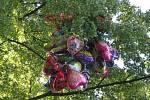 Všechny nafouknuté balonky na potštejsnké pouti uletěly a zůstaly na stromě.