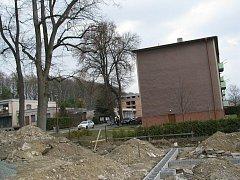 Osud lípy je zpečetěný.  Většina vlastníků bytového domu v Kvasinách podpořila pokácení vzrostlého stromu.