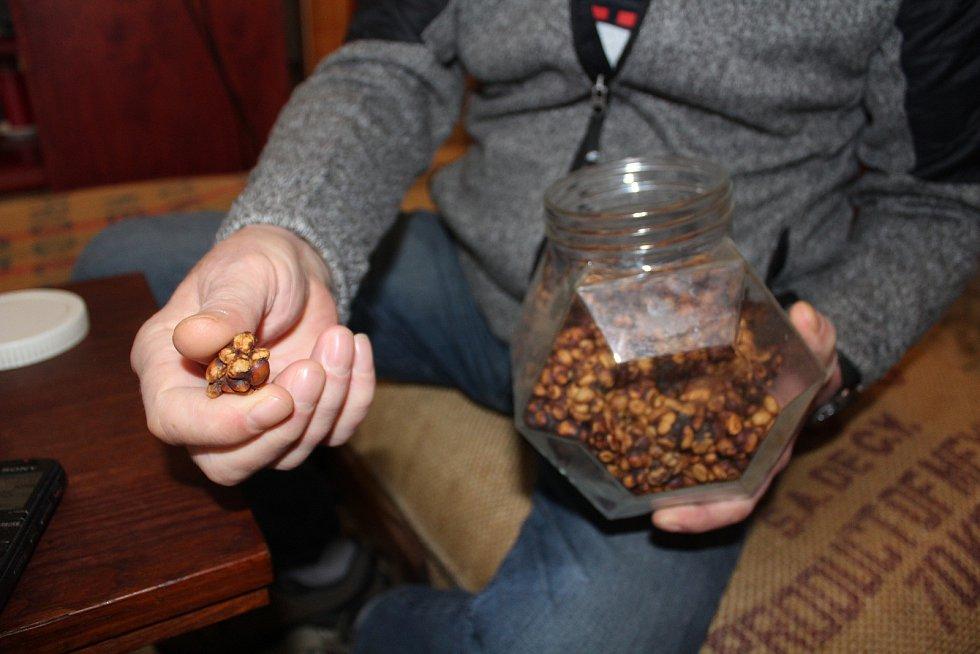 Navštívit Frolíkovu pražírnu kávy v Borohrádku je zážitek. Cibetková káva.