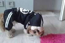 Pes Maxík.