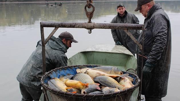 U Broumaru bylo v sobotu hodně rušno. Výlov sem přilákal mnoho návštěvníků, ten letošní se o něco prodloužil. Mnozí příchozí pak neodolali nabídce hotových rybích pochoutek.