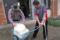 Začala sezona kysaného zelí. Josef Petrlák z Tutlek  je stálým zákazníkem soukromě hospodařících zemědělců Vašátkových z Dubí u Tutlek. Pro zelí si přijel s kárkou.
