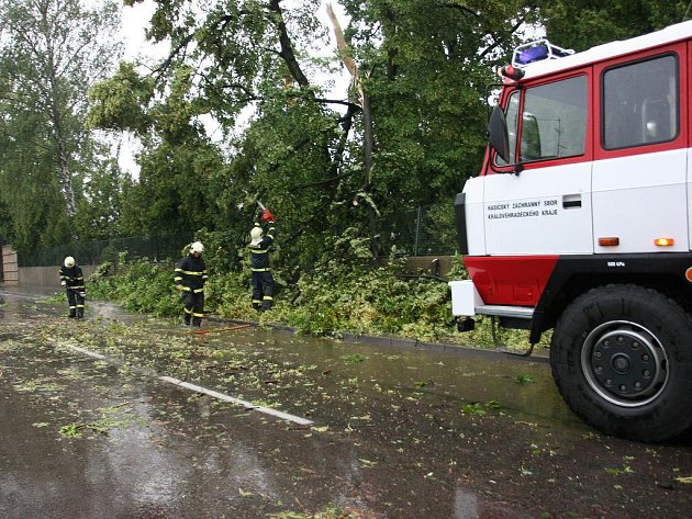 Spadlý strom u hřbitova v Opočně.