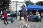 Na náměstí v Dobrušce se v tradiční soutěži vodicích psů představilo patnáct účastníků.