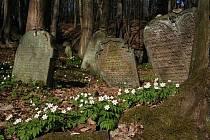 Podbřezí, židovský hřbitov