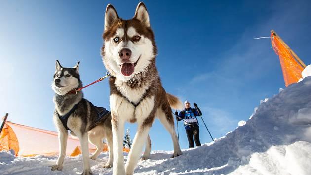 Šediváčkův long - závod psích spřežení na hřebeni Orlických hor.
