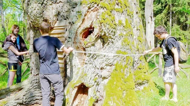 Ekologové se vyfotili pod největším dubem Podorlicka, který pak změřili.