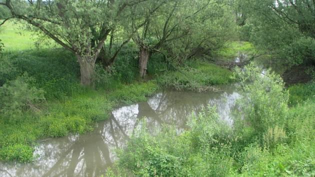 I PO POSLEDNÍCH DEŠTÍCH je ve Staré řece u Štěpánovska mnohem více bahna než vody. Bývalé koryto Orlice se začalo zanášet po napřímení toku v minulosti.