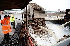 Zahájení letošní kampaně v cukrovaru v Českém Meziříčí oddálilo extrémní sucho. Skončí na začátku nového roku.