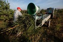 Platáž vánočních stromků v Houdkovicích na Rychnovsku