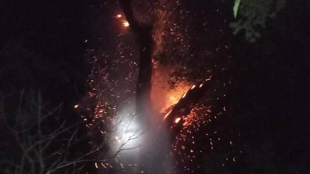 Strom začal hořet zřejmě po zásahu bleskem.
