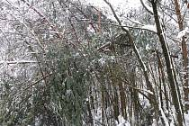 Zima 2010, Rychnovsko