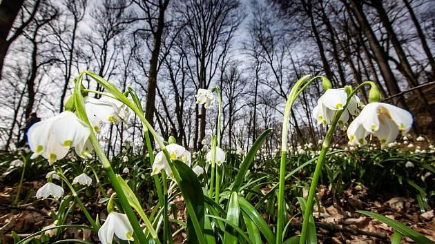Jarní tvoření