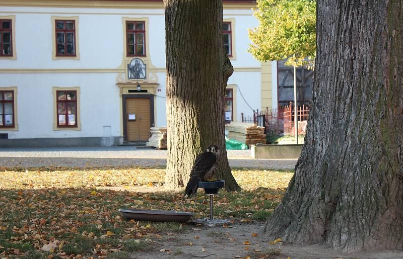 Z podzimní procházky Opočnem.