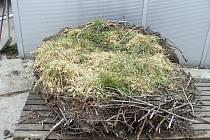 Příprava hnízda