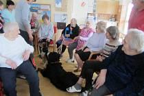 Terapie se zvířaty je u seniorů velice oblíbená.