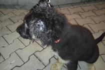 Štěněti uvízla hlava v kari síti, pomohli hasiči.