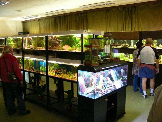 Rychnovská výstava AquaEXPO v Domě chovatelů.