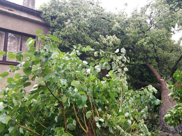 Lípa zavalila dům. Vzrostlý strom museli odstranit hasiči